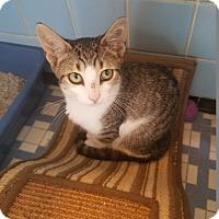 Adopt A Pet :: Houdini - Warren, MI