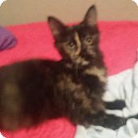 Adopt A Pet :: Roxie - Levelland, TX