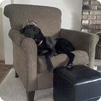 Adopt A Pet :: Buddy - Cleveland, OH