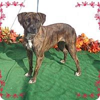 Adopt A Pet :: ALESHA - Marietta, GA