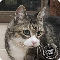 Adopt A Pet :: Christine - Troy, OH