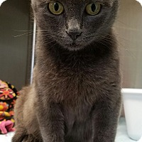 Adopt A Pet :: Stormy *Bicycle Fisher - La Crescent, MN