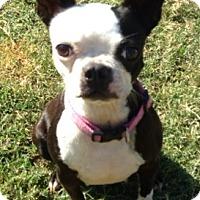 Adopt A Pet :: Gisele - Watauga, TX