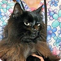 Adopt A Pet :: Felix - Wildomar, CA