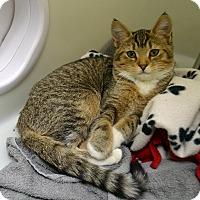 Adopt A Pet :: Brenna - Wheaton, IL