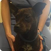 Adopt A Pet :: Bob - Gainesville, FL