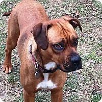 Adopt A Pet :: Ellie Mae 4185 - Dayton, OH
