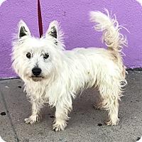 Adopt A Pet :: Enzo - Los Angeles, CA