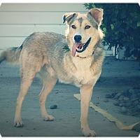 Adopt A Pet :: KAMA - Glendale, CA