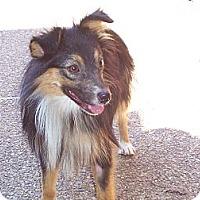 Adopt A Pet :: Ozzie - Lexington, TN
