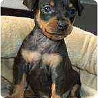 Adopt A Pet :: Tiegan - Minneapolis, MN