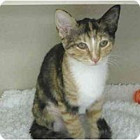 Adopt A Pet :: Chloe - Mesa, AZ