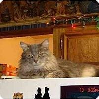 Adopt A Pet :: Noelle-PETSMART - Muncie, IN