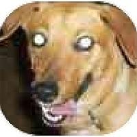 Adopt A Pet :: C.C. - Mesa, AZ
