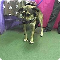 Adopt A Pet :: Sydney - San Diego, CA