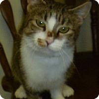 Adopt A Pet :: Skittles - Hamburg, NY