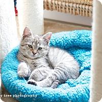 Adopt A Pet :: Dana - Island Park, NY