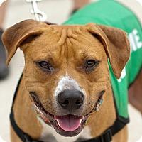 Adopt A Pet :: Rupert - Holmes Beach, FL