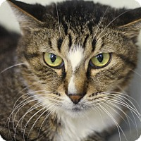 Adopt A Pet :: Trafalgar - Chicago, IL