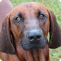 Adopt A Pet :: Danny - Allentown, PA