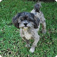 Adopt A Pet :: TATER TOT - Los Angeles, CA