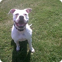 Adopt A Pet :: URGENT! - Jenny - Caledon, ON