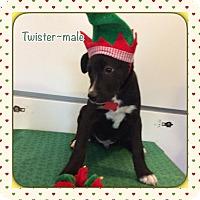 Adopt A Pet :: Twister - Harmony, Glocester, RI