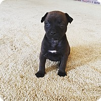 Adopt A Pet :: Mercy - Homewood, AL