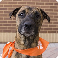 Hound (Unknown Type) Mix Dog for adoption in Mooresville, North Carolina - Ernie