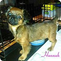 Adopt A Pet :: Hannah - House Springs, MO