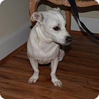 Adopt A Pet :: Wallie - Houston, TX