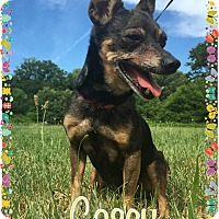 Adopt A Pet :: Casey - Greensboro, MD