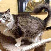 Adopt A Pet :: GERTIE - Sacramento, CA