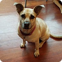 Adopt A Pet :: Chloe - Los Angeles, CA