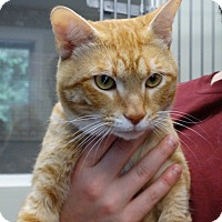 Adopt A Pet :: Spencer - Fall River, MA