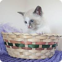 Adopt A Pet :: Spanky - Muskegon, MI