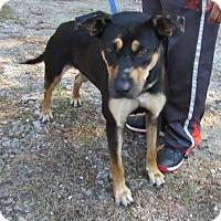 Adopt A Pet :: Miya - Warrenton, NC