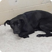 Pit Bull Terrier Mix Dog for adoption in Pikeville, Kentucky - Ruby