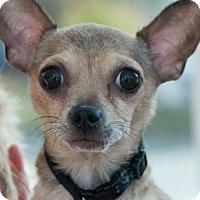 Adopt A Pet :: Bailey - Alpharetta, GA