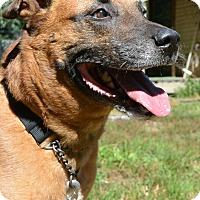 Adopt A Pet :: Jake & Nova - Afton, NY