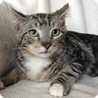 Adopt A Pet :: Sebastion - Antioch, CA