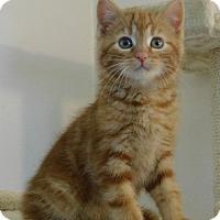 Adopt A Pet :: Caramel - Elkhorn, WI