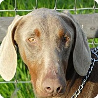 Adopt A Pet :: Bleau - Vacaville, CA