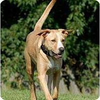 Adopt A Pet :: Casanova - Glen Allen, VA