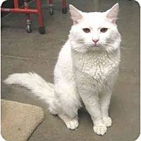 Adopt A Pet :: Baxter - Mesa, AZ