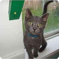 Adopt A Pet :: Texas - Hamburg, NY