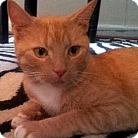 Adopt A Pet :: Peanut - Alexandria, VA