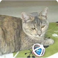 Adopt A Pet :: Kai Min - Mesa, AZ