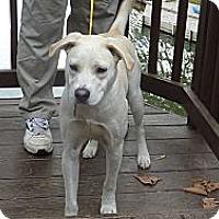 Adopt A Pet :: Zach - Raleigh, NC