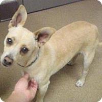 Adopt A Pet :: Milo - Las Vegas, NV